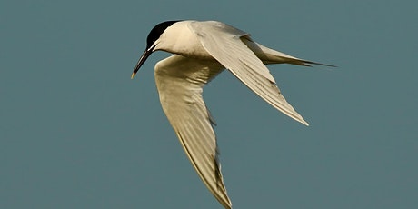 Breeding Seabirds in the North East tickets