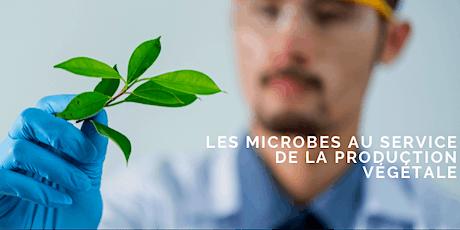 Les microbes au service de la production végétale… et de l'économie ? billets