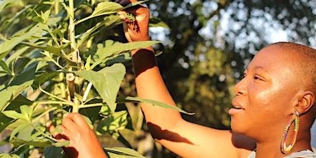 Black Indigenous Women & the Land tickets