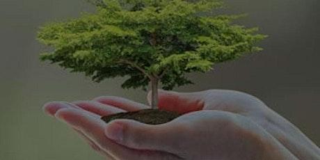 La app Treelife y el apalancamiento exponencial de tu emprendimiento verde entradas