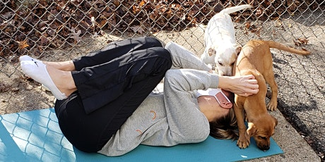 Doggy Noses & Yoga Poses - Barks, Bends, and Beer at Bellefonte Brandywine! tickets