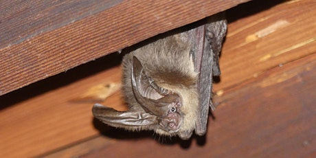 Bay Area Bats Demystified tickets
