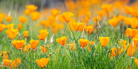 Wildflowers of the Bay Area tickets