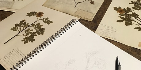 Botanical Illustration tickets