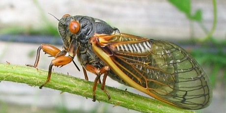 Periodical Cicadas in Montgomery County: An Intersection of Human History tickets