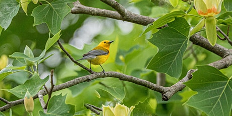 SPRING PHOTO SAFARI: Where to Find the Best Birds, Buds, & Beasts tickets