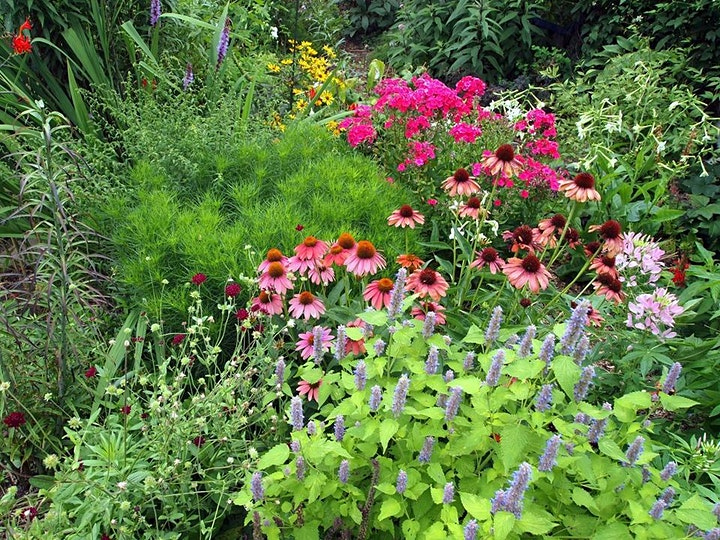 Lunch & Learn for Gardeners: A FRESH LOOK AT GARDENING image