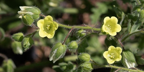 Bay Nature Talks: Chaparral Fire Ecology & Fire-Following Plants Around Us tickets