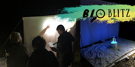 Nocturnal Insects & Bats (BioBlitz) tickets