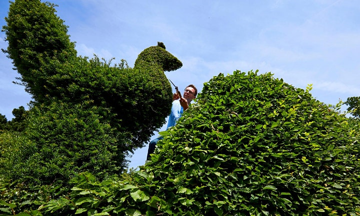 Topiary In Modern Gardens: A Provocation For Garden Designers (Morning) image