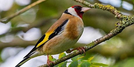 Virtual Bird identification talk tickets