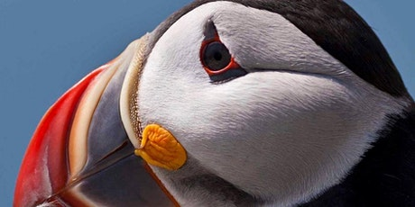 Schoodic Institute's Puffin Day Trip and Picnic tickets
