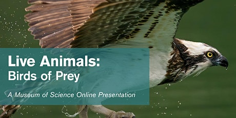 Live Animals: Birds of Prey tickets