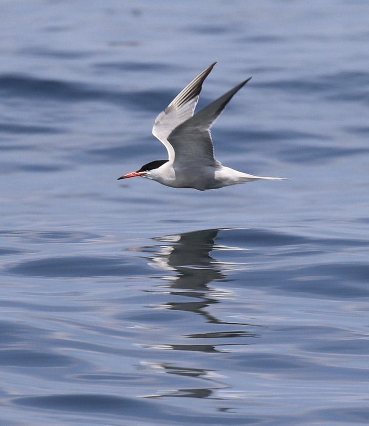 Schoodic Institute's Puffin Day Trip and Picnic image