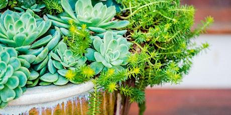 Striking Succulents: Landscape Design tickets