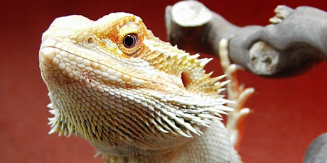 Copy of Keeping your reptile happy, healthy and safe!- a pet owners guide tickets