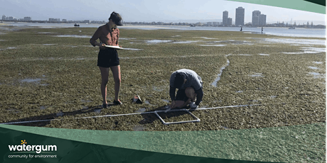 Seagrass Survey – Loders Creek tickets
