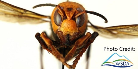 FREE Asian Giant Hornet Info Session, Open to the Public (Canada & USA) tickets