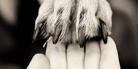 Comuni-CANE: Impariamo a comunicare con il nostro cane biglietti