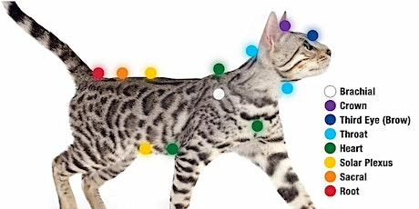 Chakras and meridians for cats - How energy effects our cats. tickets