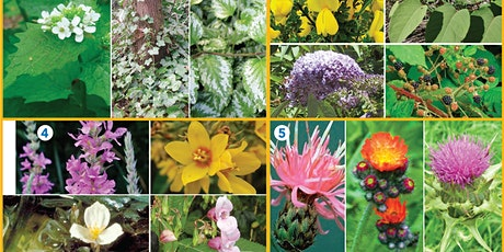 King County Noxious Weed Control Board Meeting tickets