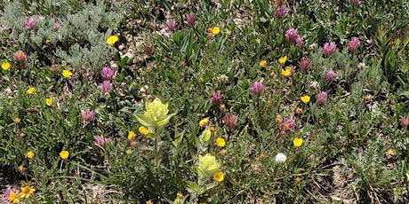 Developing High Diversity Native Gardens with Seed (and Some Transplants!) tickets