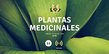 Webinar de Plantas Medicinales entradas