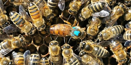 Women's only Beekeeping workshop tickets