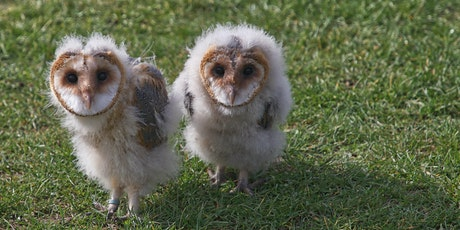 Lane Cove Bush Kids - Owl Babies tickets