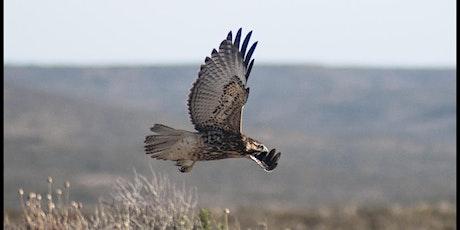 02/03 Observación de aves entradas