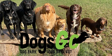 WEEKEND - Small & Medium Dog Socialisation and Play - Socially Distant tickets