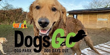 Wednesday: Big and Medium Dog Social - Over 20kg tickets