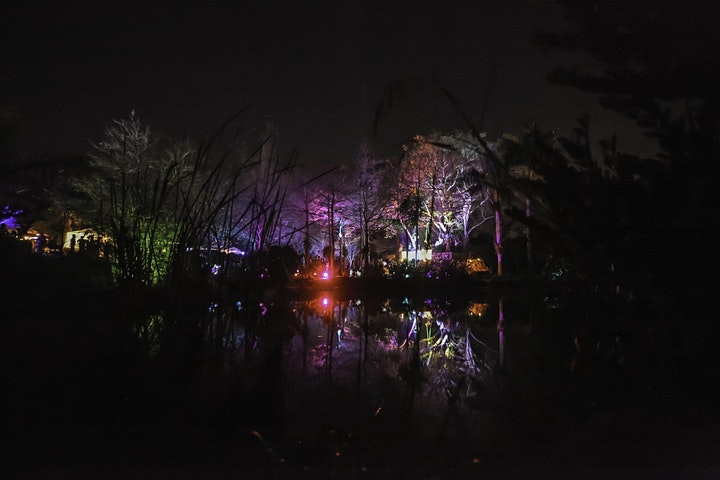 FIRE FLIES FOREST (MAYAN EQUINOX) image
