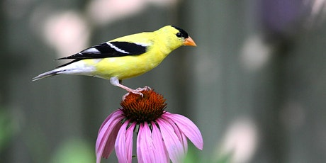 Native Plants for Birds Webinar tickets