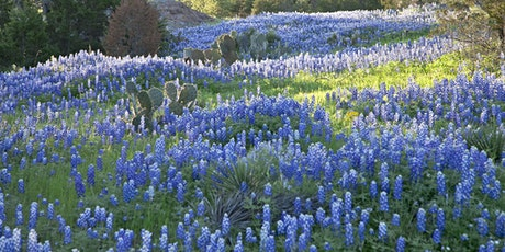 Texas Bluebonnet and Wine Festival tickets