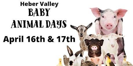Heber Valley Baby Animal Days tickets