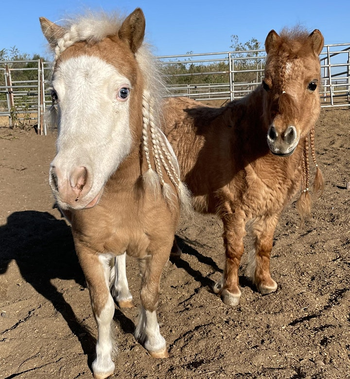 Pet and Paint with Miniature Horses image