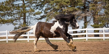 Equine Photography Workshop (EPW-1) May 16th, 2021 12:00 pm -5:15 pm tickets