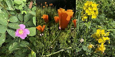Spring Wildflower Walks on Mount Sutro tickets
