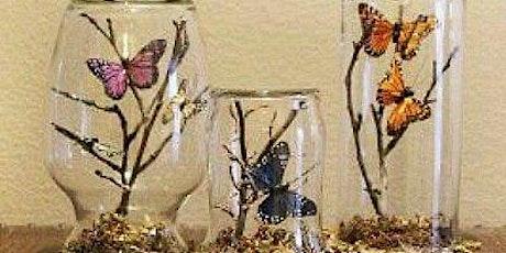 Butterfly Terrarium tickets