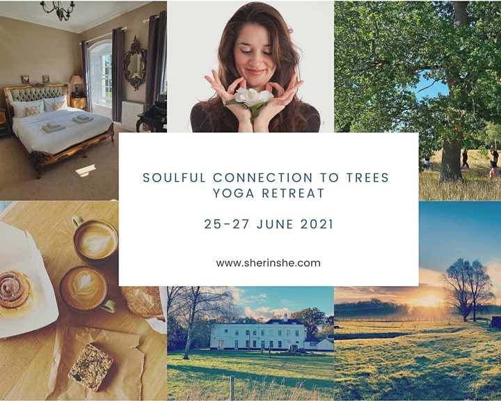 Soulful Connection to Trees Yoga Retreat Weekend image