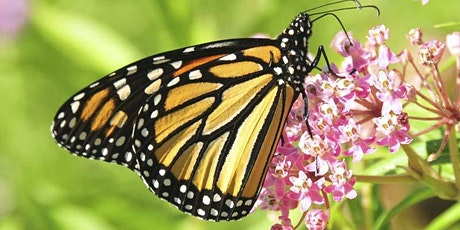 Butterfly Gardening with Host Plants tickets