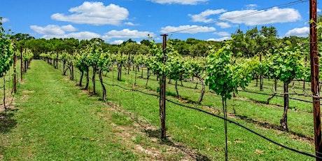 Vineyard Management Series - Pruning tickets