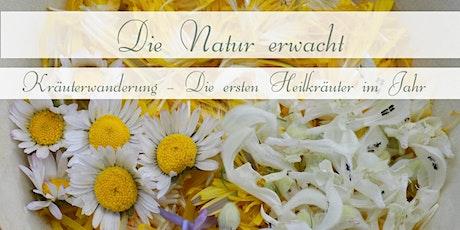 Die Natur erwacht – Kräuterwanderung – Die ersten Heilkräuter im Jahr Tickets