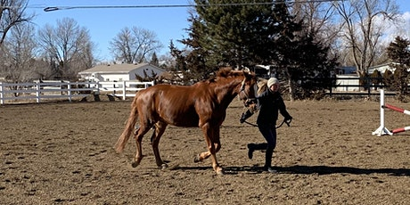 Equine Lameness: How to Get a Sound Diagnosis tickets