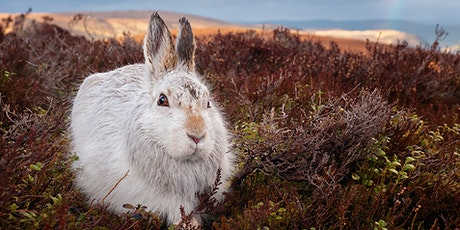Wildlife and Nature Photography with Tesni Ward tickets