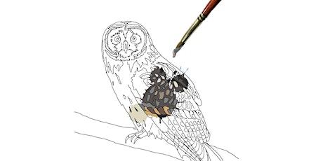 Creative Science: Paint by Science, Short-Eared Owl bilhetes