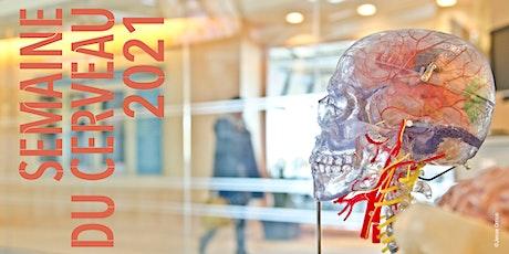 Dissection virtuelle du cerveau billets