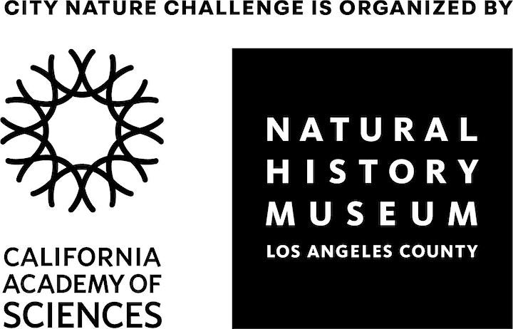City Nature Challenge 2021 image