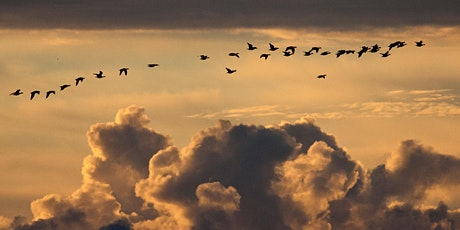 Migration - a sneak peak to Awakening the Field tickets